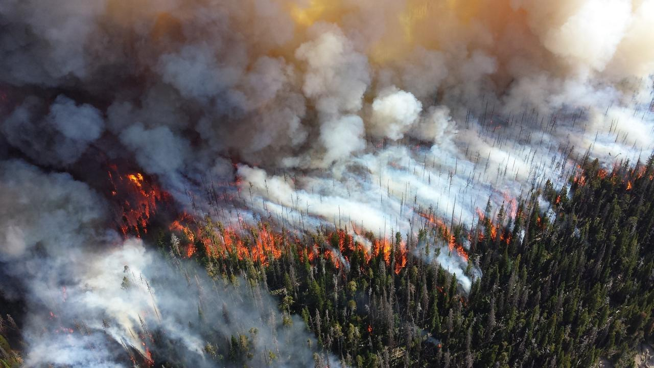 Aerial view of forest wildfire